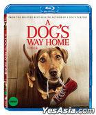 A Dog's Way Home (Blu-ray) (Korea Version)