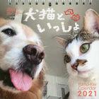 karenda  2021 inu neko to itsushiyo shiyuumekuri karenda  shiyuu mekuri