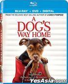 A Dog's Way Home (2019) (Blu-ray + DVD + Digital) (US Version)