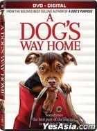 A Dog's Way Home (2019) (DVD + Digital) (US Version)
