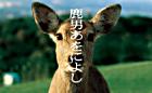 Shika Otoko Awoniyoshi DVD Box (DVD) (End) (Japan Version)
